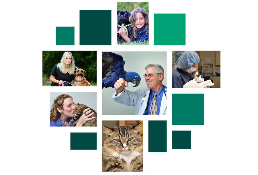 custom-photography-for-veterinarians